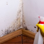 Mold removal is very difficult.