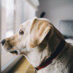 Dog Home Alone
