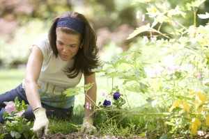 non-combustible-mulch-gardening