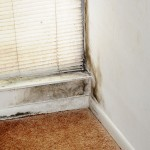 You must call professionals for serious mold growth.