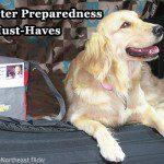 Make sure you have an efficient pet disaster preparedness plan.