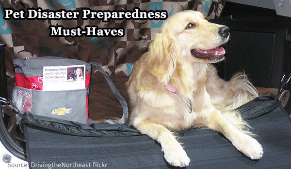 Make sure you have an efficient pet disaster preparedness plan.