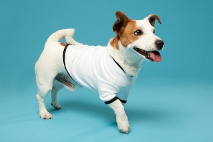 Thunder-shirt-dog