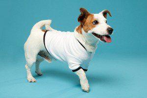 Thunder-shirt-dog