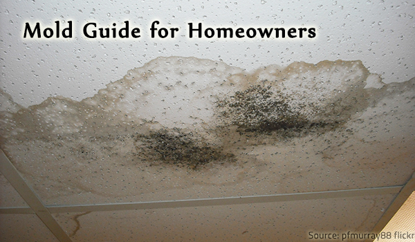 A mold guide with all the mold facts you need to know.