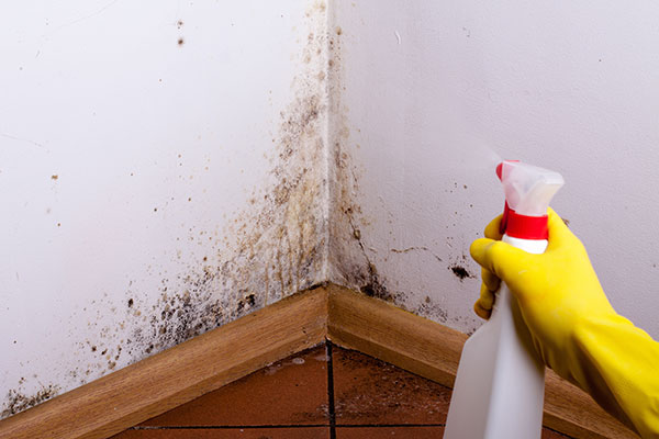 Mold removal is quite difficult.