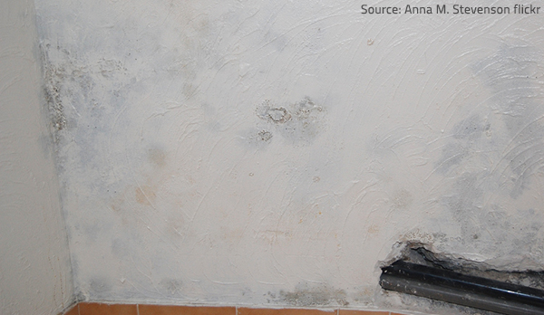 Testing for mold will tell you whether you have a mold problem in your home or not.