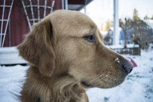 Bring-Pets-Inside-Cold-Weather-Safety-Tips