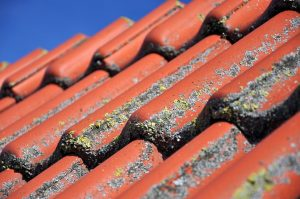 Spring-Roof-Damage-Reliable-Roofing