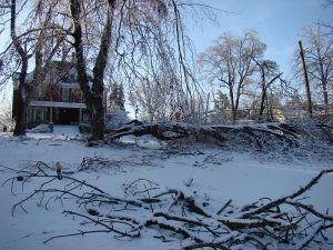 How to Check your Trees for Winter Storm Damage
