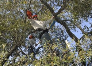 When to Call an Arborist for a Tree Assessment