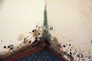 Black Mold Removal - DIY or Hire a Pro - ServiceMaster NCR