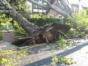 Damage-Caused-by-Lightning-and-Storms