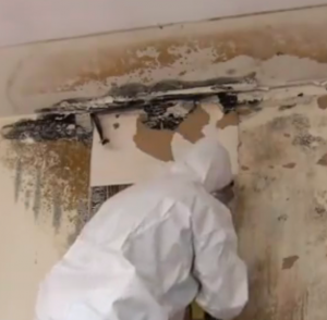 Professional Mold Remediation from ServiceMaster NCR