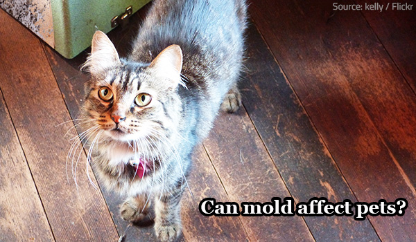 How does mold affect pets?
