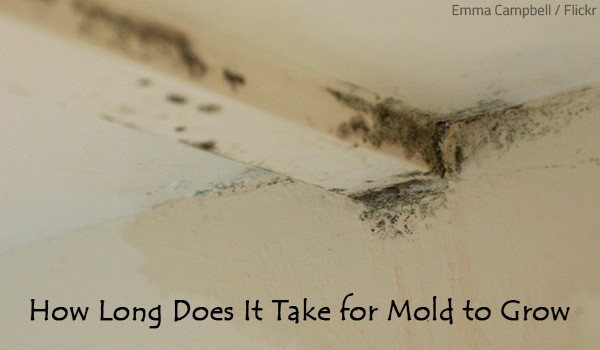 How long does it take for mold to grow?