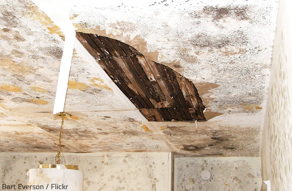 Mold Growth After Water Damage