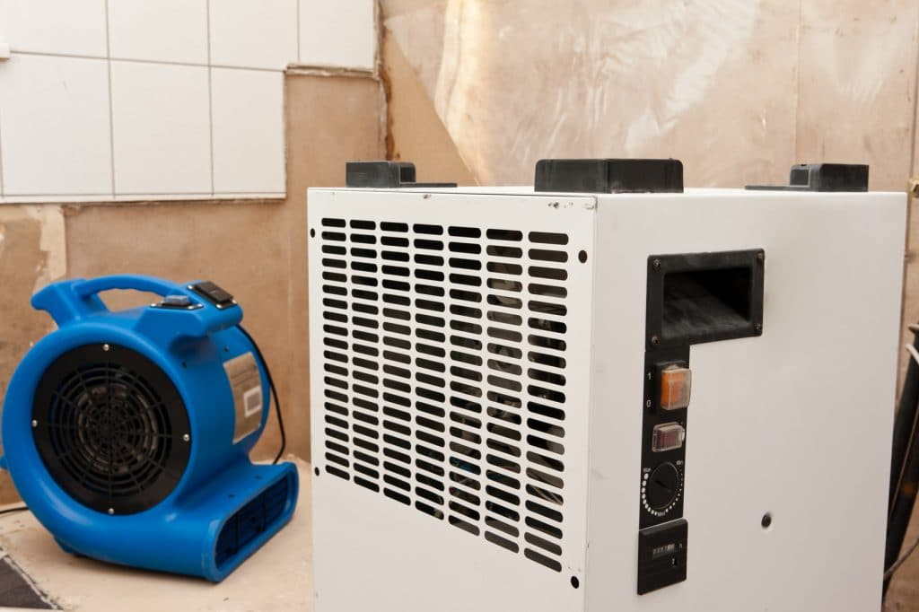 How Long Does It Take for Mold to Grow | RestorationMaster ...