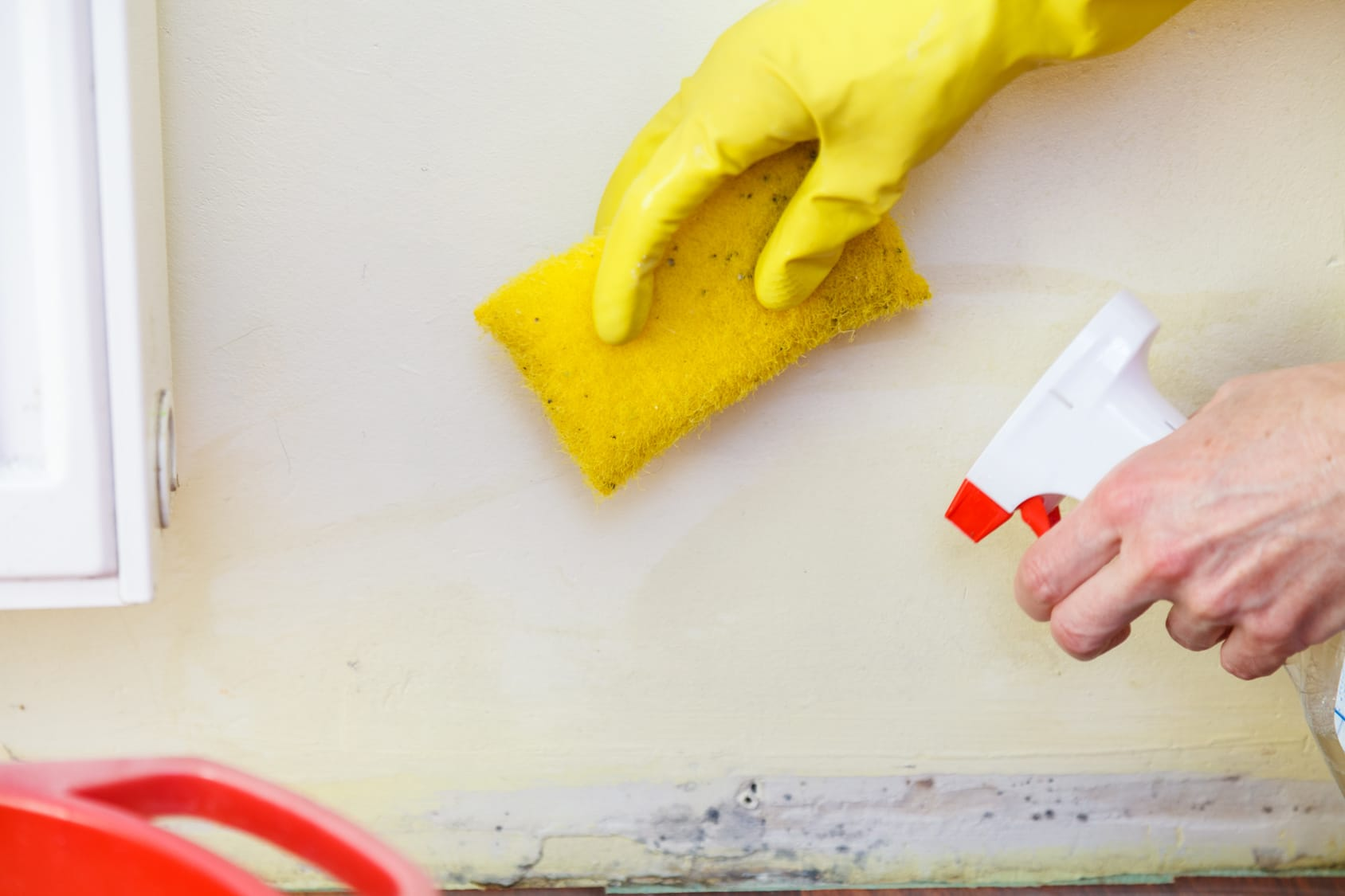 Find And Use A Mold Removal Service