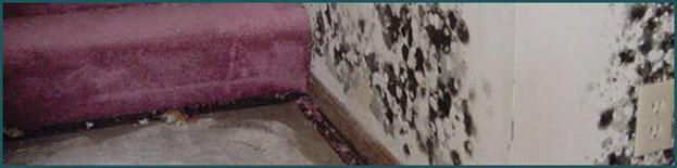 Mold Remediation Services Salt Lake UT