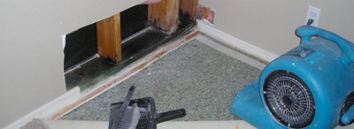 Mold Remediation Chattanooga TN