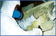 Mold Remediation Rockford IL