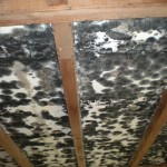 Mold Remediation – Marion, IN