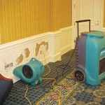 Mold Removal Services in Scottsdale AZ
