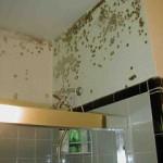 Mold Removal Washington DC