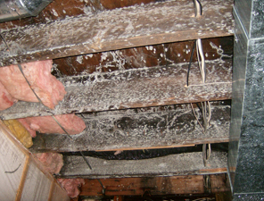 Mold Remediation St Cloud MN