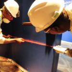 Mold Removal Services in Reston, VA