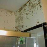mold-bathroom-of-South-Lake-Tahoe-CA