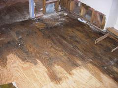 Mold Remediation in Missouri City, TX