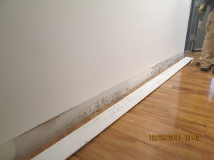 Mold Remediation in Newtown and Yardley, PA - ServiceMaster