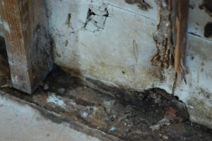 Mold Damage on Walls and Floor