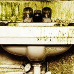 Mold Remediation Levittown PA