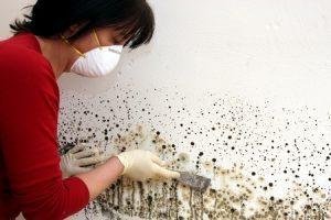 Mold Remediation Services – Salem, OR