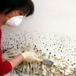 Mold Removal in Corvallis, OR
