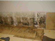 Water Intrusion Behind wainscot