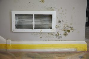 Mold Removal - Albany, OR