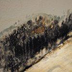 Mold Remediation in Hampton, CT 06247