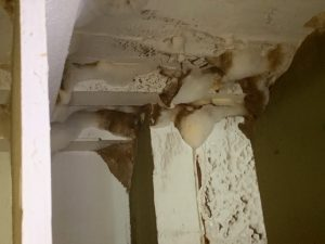 Mold-Remediation-Spokane-Valley-WA