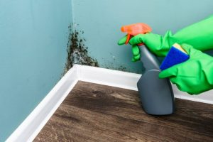 mold remediation and removal in Stoneham, MA by ServiceMaster Disaster Associates, Inc.
