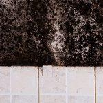 Mold-Remediation-In-Terre-Haute, IN