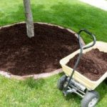 Tree-Planting-Services-Niles-IL