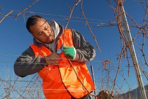 Tree-Pruning-Services-Niles-IL