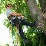 Tree-Removal-Services-in-Niles-IL