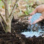 Tree-Fertilization-Services-Skokie-IL