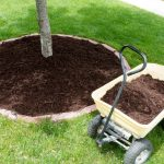 Tree-Planting-Services-Skokie-IL