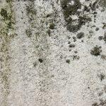 Mold-Remediation-TR Water & Fire Restoration-Wayne-NJ